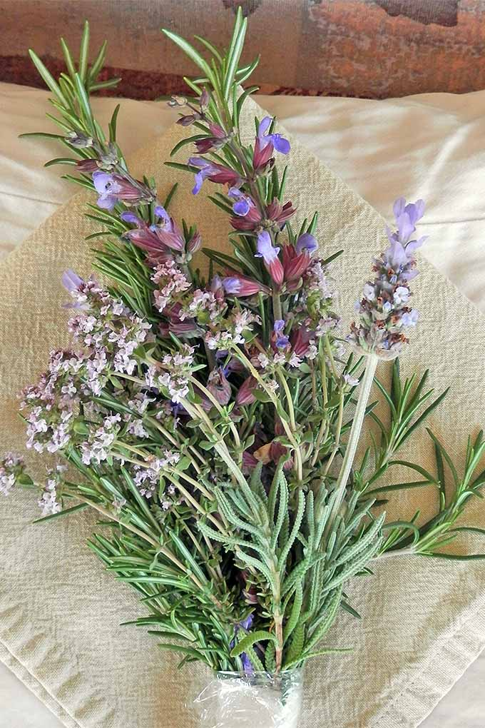 A posy of lavender, rosemary, sage and thyme. Learn how to spruce up your herb garden this spring with these tips: https://gardenerspath.com/plants/herbs/spring-care-tips/
