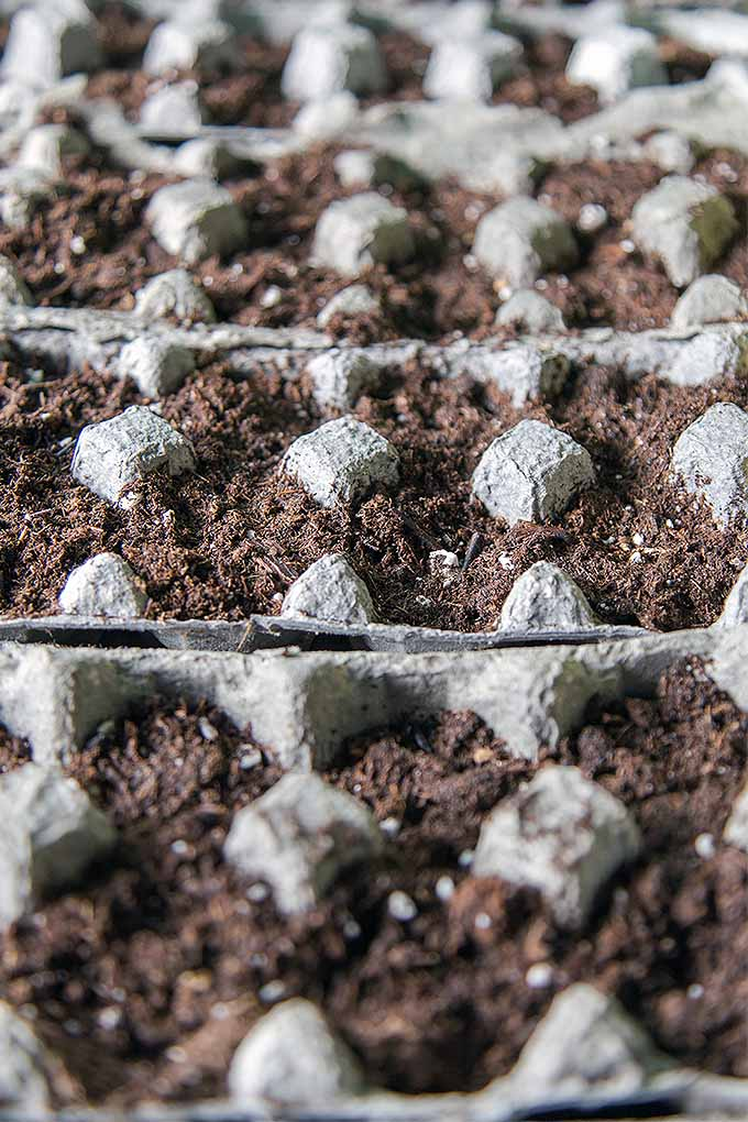 Have you selected your seeds for the season? Check out our tips for starting those seedlings indoors: https://gardenerspath.com/plants/vegetables/start-annuals-indoors/