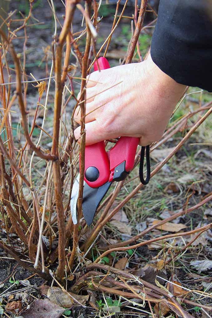 Not sure how to get the garden ready for spring? Spruce up your space and prepare for planting with these tips: https://gardenerspath.com/how-to/pruning/spring-garden-checklist/