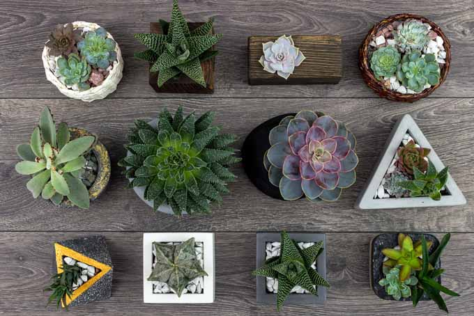 Propagating Succulents in 5 Easy Steps | GardenersPath.com