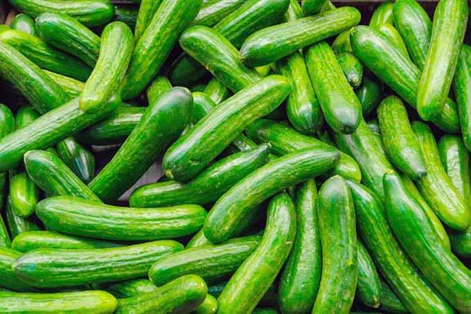 How To Grow Cucumbers | GardenersPath.com
