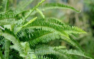 "Add a Touch of ""Jurassic Park"" to Your Garden: How to Grow Ferns"