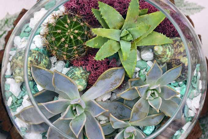 Grow Succulents In 5 Easy Tips | GardenersPath.com