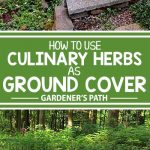 A collage of photos showing different edible herbs suitable for ground covers.