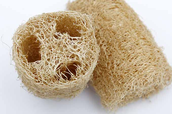 Learn how to grow your own loofah sponges   GardenersPath.com