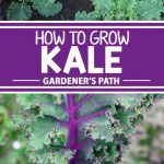 A collage of photos showing different varieties of kale growing in a garden.