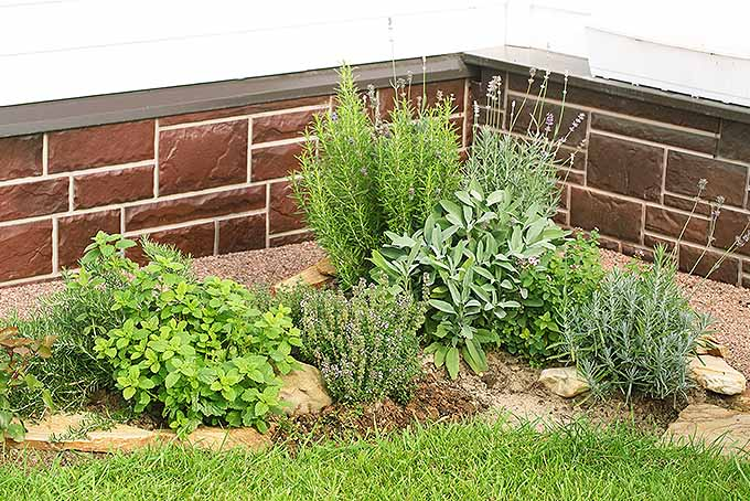 Learn how to xeriscape your garden by planting drought-tolerant natives. | GardenersPath.com