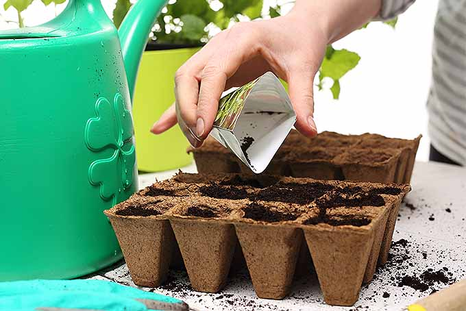 Learn the correct planting depth and more by reading the packaging. | GardenersPath.com