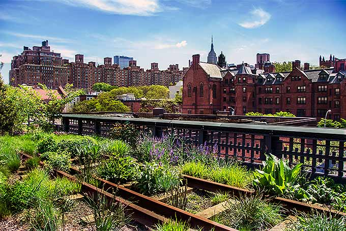An example of xeriscaping in High Line Park, Manhattan.