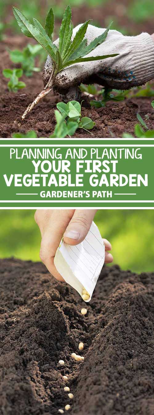 If you're new to the world of vegetable gardening, you're in for a treat! Fresh veggies have a flavor that can't be beat, and they're healthy and nutritious. Plus, growing your own is friendly on the budget, and gardening is an excellent way to reduce stress. Learn all about these positive benefits right here on Gardener's Path.