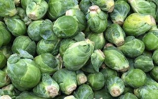 A Flavor You've Come to Love: How to Grow Brussels Sprouts