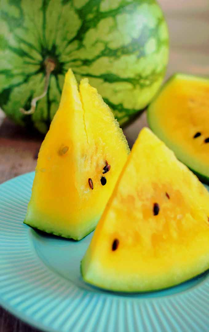 Do you know that watermelon is not just red? This succulent fruit comes in different varieties and colors. Learn more about this refreshing fruit now: https://gardenerspath.com/how-to/beginners/grow-watermelons/