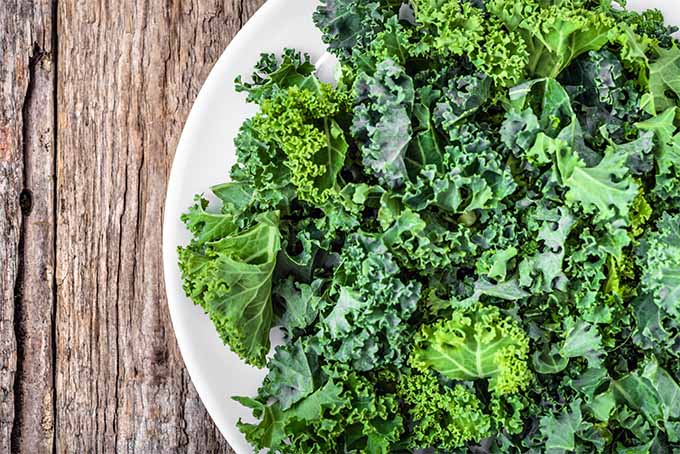 Learn how to grow tasty and nutritious kale in your garden | Gardener's Path