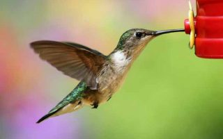 Attract Crowds of Hummingbirds to Your Backyard With These Awesome Feeders!