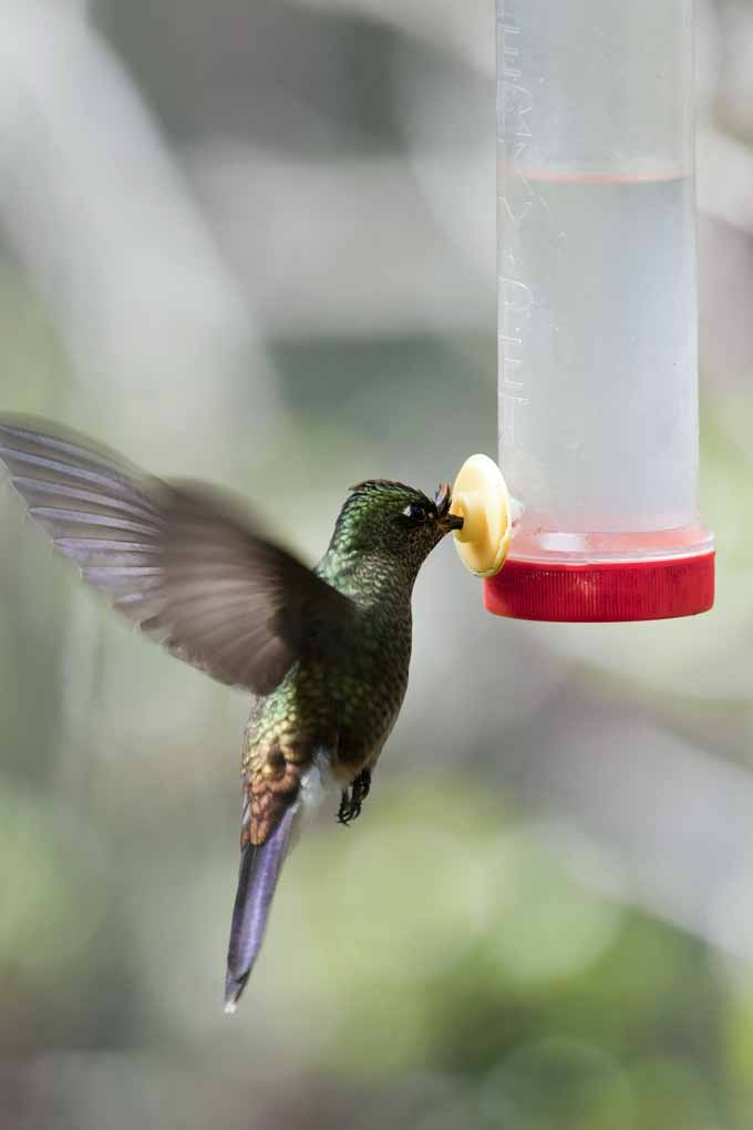 Do love the flutter and buzz of humming birds feeding in your garden on a warm summer morning? If so, check out our guide to find the best feeder for your sanctuary. Find out all you need to know on Gardener's Path now!