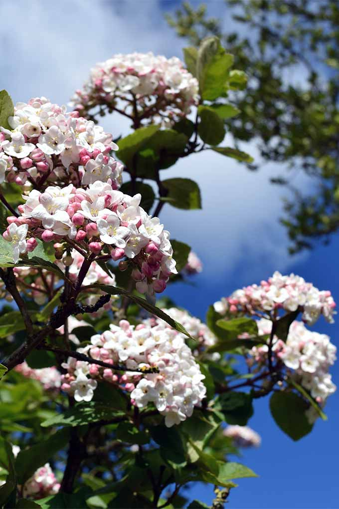 Check out our list of best fragrant flowers and shrubs: https://gardenerspath