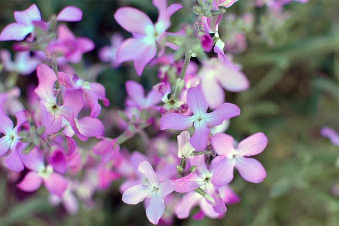 We list 19 super-smelling flowers and shrubs for your back yard | GardenersPath.
