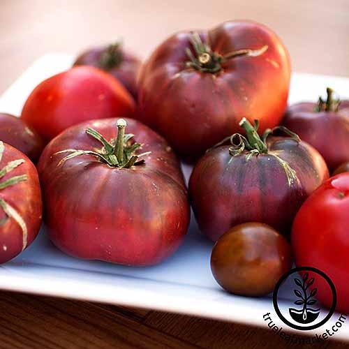 Cherokee Purple | GardenersPath.com
