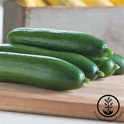 What's the best cuke for your growing region? Check out our list! | GardenersPath.com
