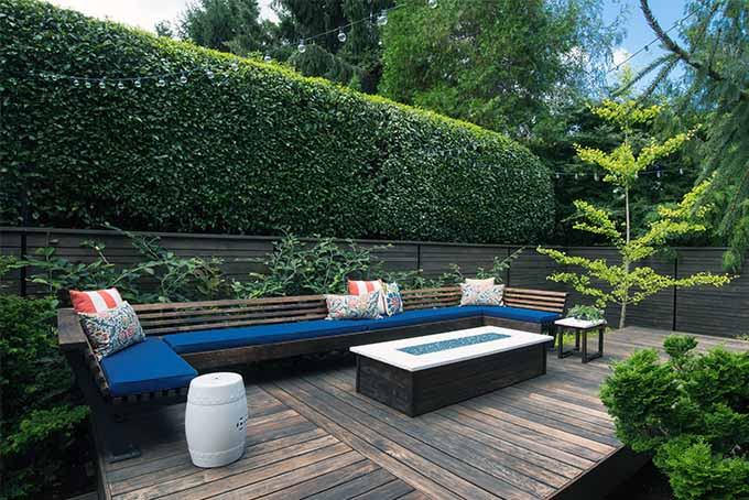 Use hedges for privacy barriers around your property | GardenersPath.com