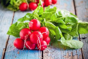 Radishes: Peppery, Piquant, and Easy to Grow