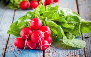 Get expert tips about growing radishes in your garden | GardenersPath.com