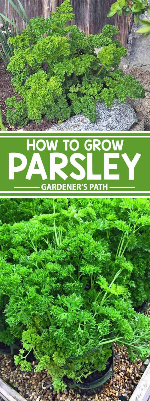 parsley garden book essay This is the case in the short story the parsley garden written by william saroyan essay on parsley garden i saw people studying and reading books.