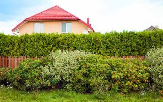 Hedges can be used for privacy or to divide to spaces | GardenersPath.com