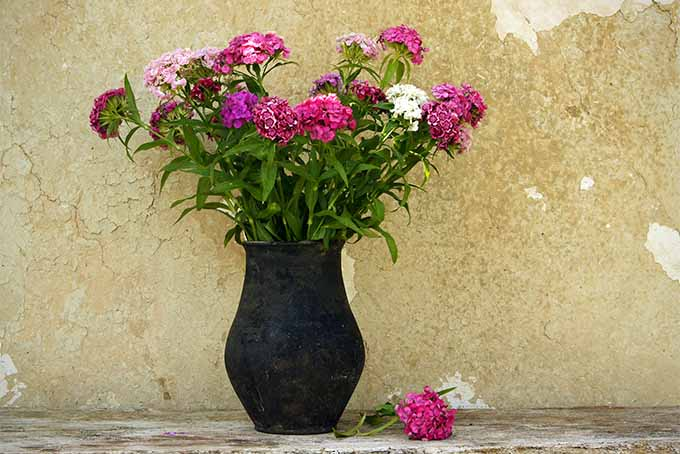 We name 19 fragrant flowers and shrubs for your garden | GardenersPath.com