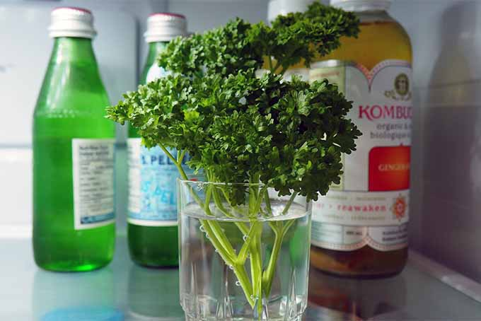 Learn how to store parsley for maximum freshness | GardenersPath.com