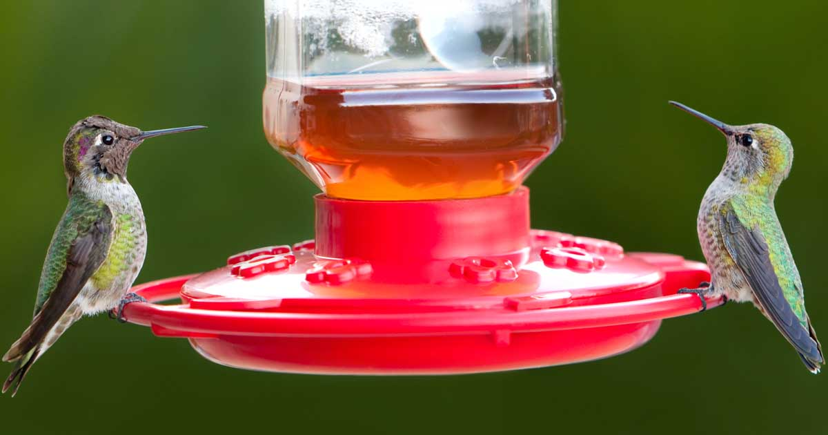 Hummingbird Feeders for Your Backyard