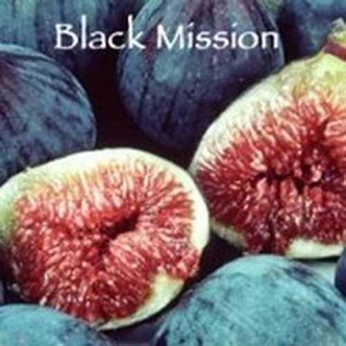 Black Mission | GardenersPath.com