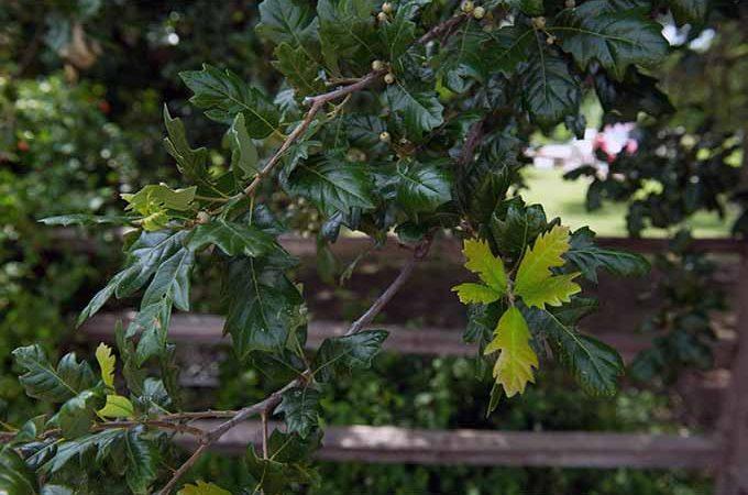 Developing a new tree species.   GardenersPath.com