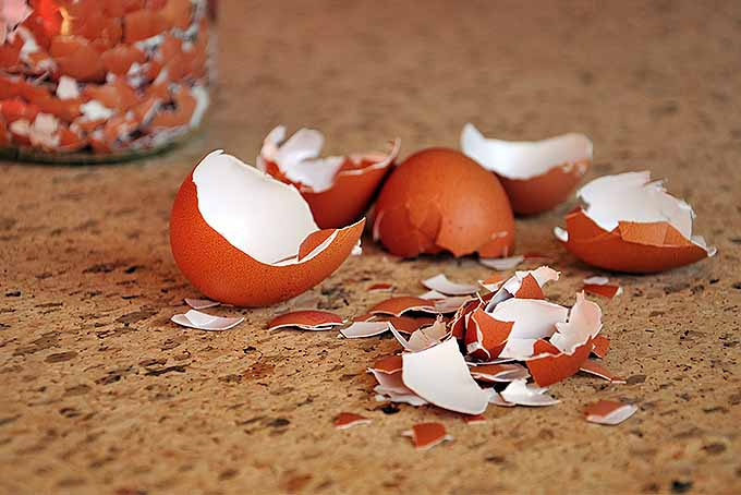 Crushed eggshells can be used as a barrier against pets in the garden. | GardenersPath.com
