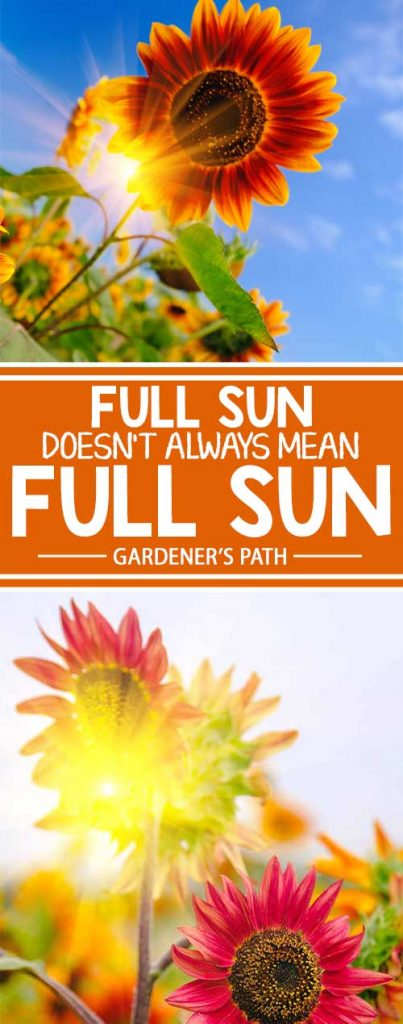 Sometimes full sun doesn't really mean full sun. Before buying plants, gardeners in hot and dry regions of the southern United States should take our expert advice into consideration, to learn where and what to plant. Read more about hot weather gardening now on Gardener's Path.