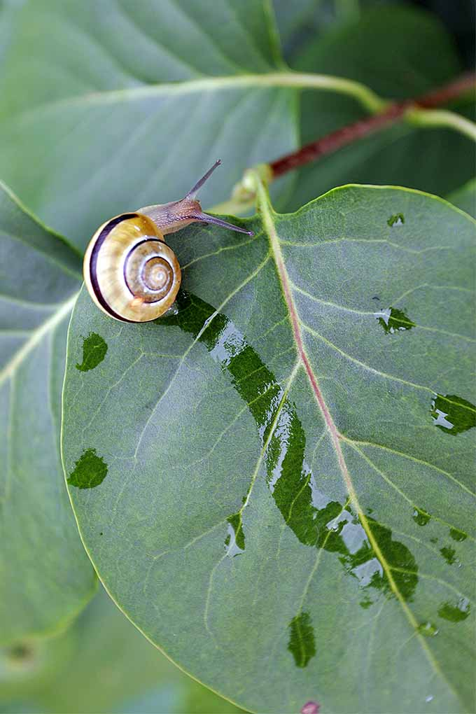 How To Protect Your Garden From Slugs And Snails