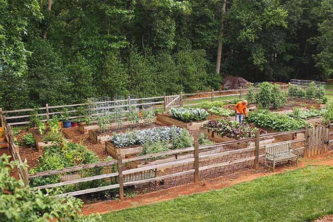 Joe Lamp'l encourages people of all ages to get into the garden and grow good food | GardenersPath.com