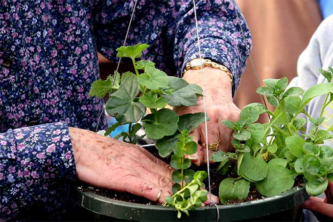 Gardening brings both physical and emotional benefits to older people | GardenersPath.com