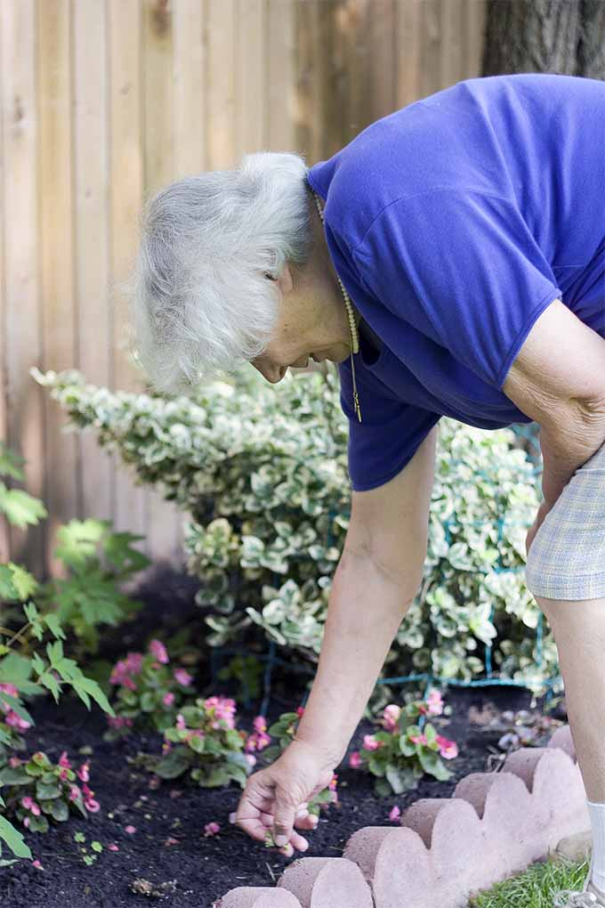 how senior citizens can benefit from gardening
