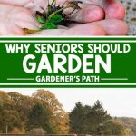 Gardening has so many benefits, especially for seniors. See why horticulture is good for our oldest generation, and learn what you can do to make it a safe and fun experience for all ages. We will also explore ways to use your green thumb to create bonding moments! For all of this and more, continue reading on Gardener's Path.