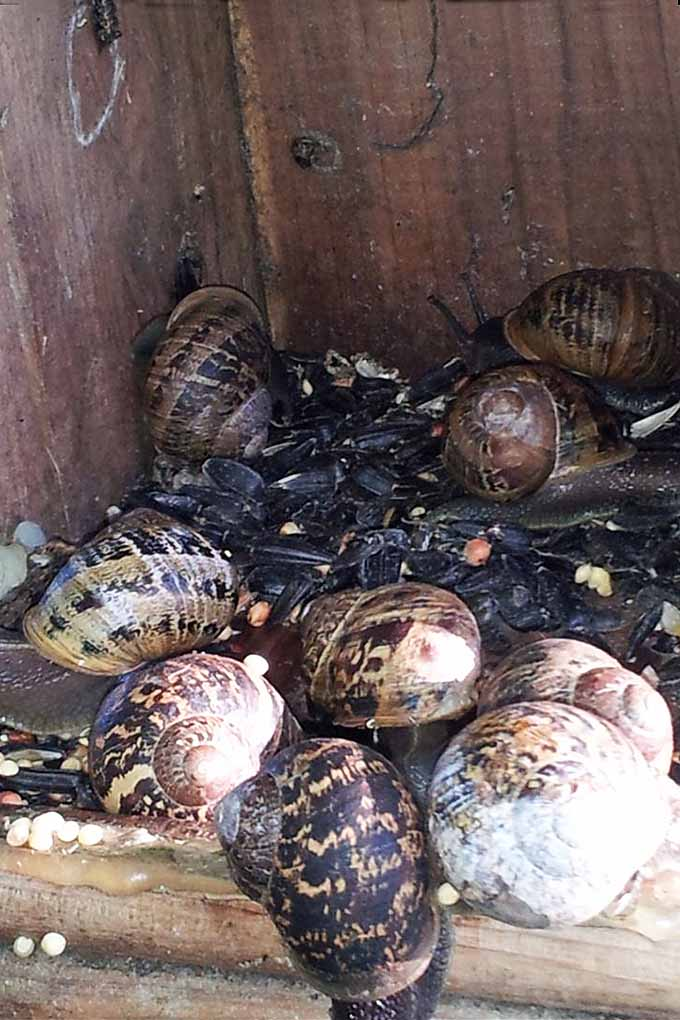 Snails have taken over the veggie patch, the pots on the porch... and now, the birdhouse? Our tips can help! Read more: https://gardenerspath.com/how-to/disease-and-pests/repel-slugs-snails/