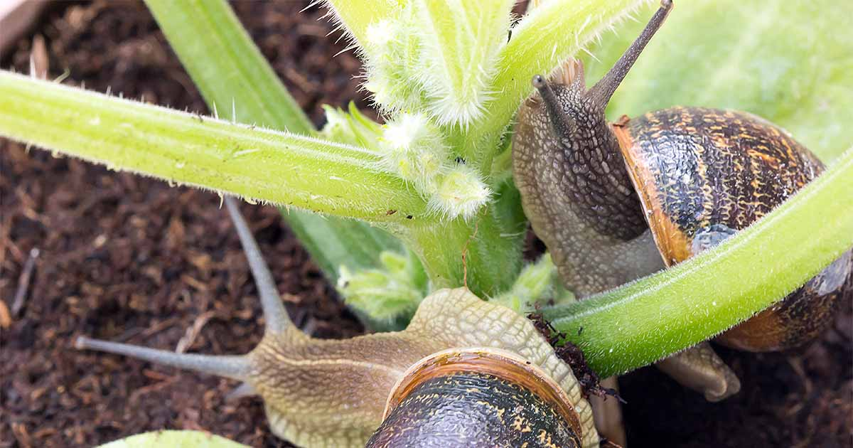 How to Protect Your Garden from Slugs and Snails | Gardener\'s Path