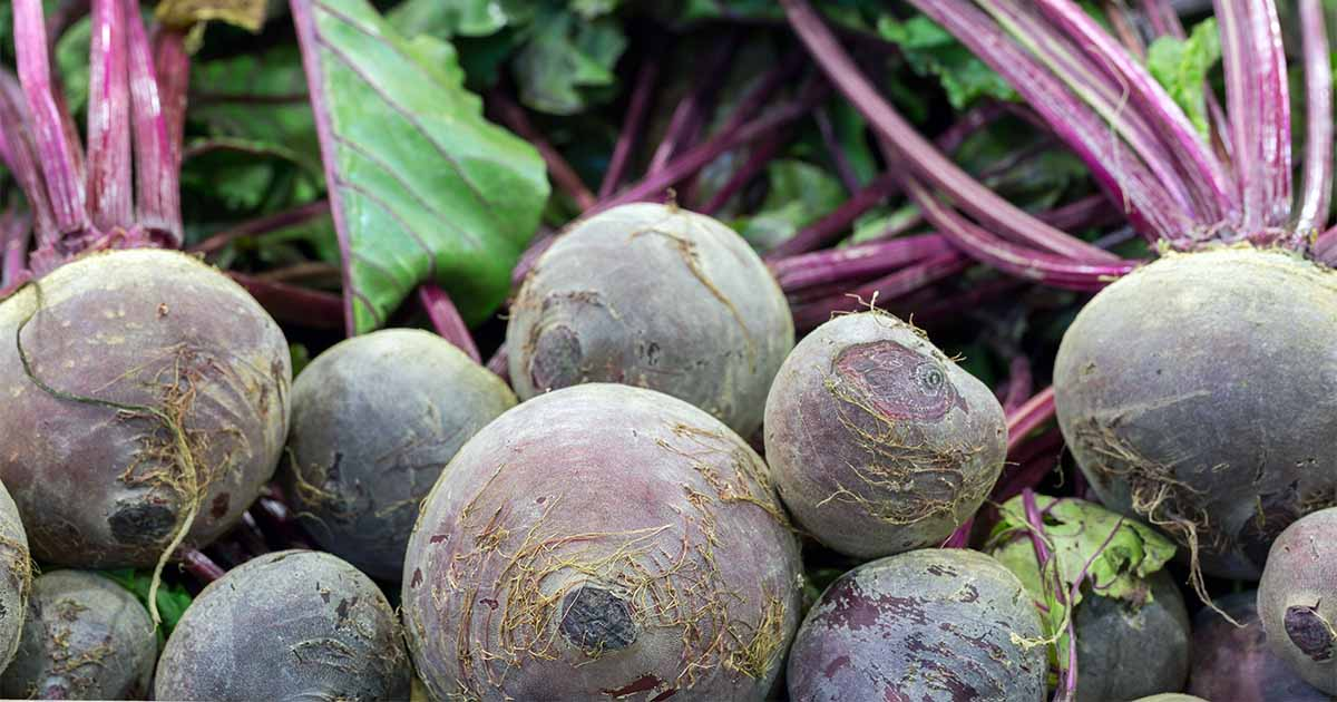 The Best Beet Varieties To Plant This Season Gardener S Path