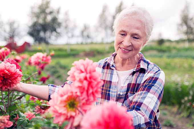 Proper tools can make gardening easy for people in their later years | GardenersPath.com