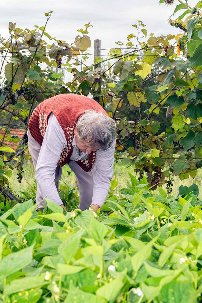 Encourage the seniors in your life to discover the heath and emotional benefits of gardening: https://gardenerspath.com/how-to/hacks/benefits-gardening-seniors/