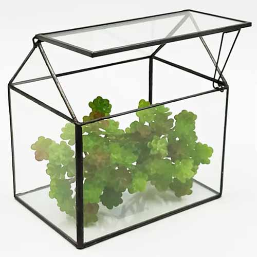 Metal and glass terrarium with a swing-top lid, with a green plant inside, isolated on a white background.