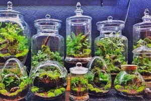 Terrariums: Mini-Landscapes for any Decor