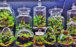 Terrariums: Mini-Landscapes for any Décor