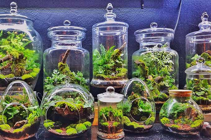 Transform a living space with the addition of a small indoor garden in the form of a terrarium | GardenersPath.com