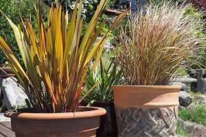Easy Landscaping with Ornamental Grasses: Simple Tips for Carefree Success